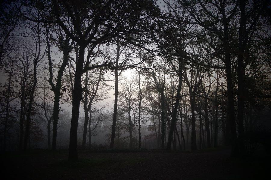 racines ancêtres samhain