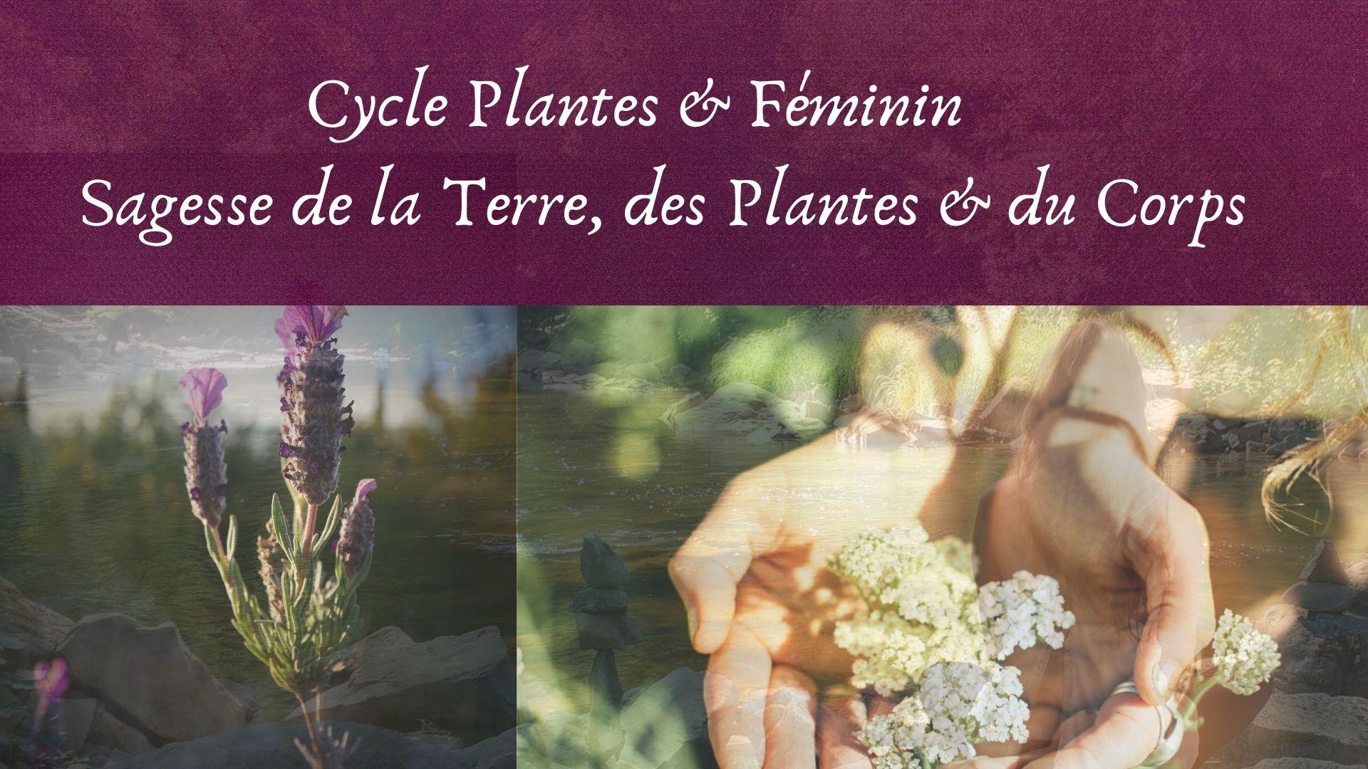 Plantes médicinales féminin