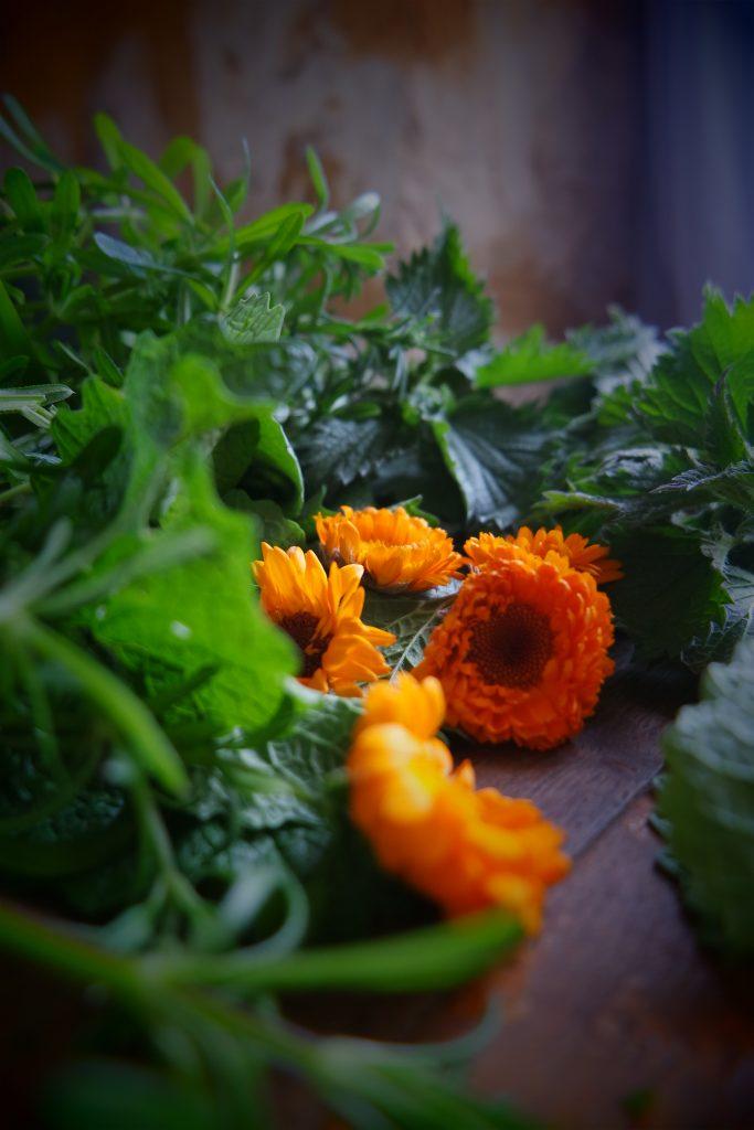 plantes dépuratives