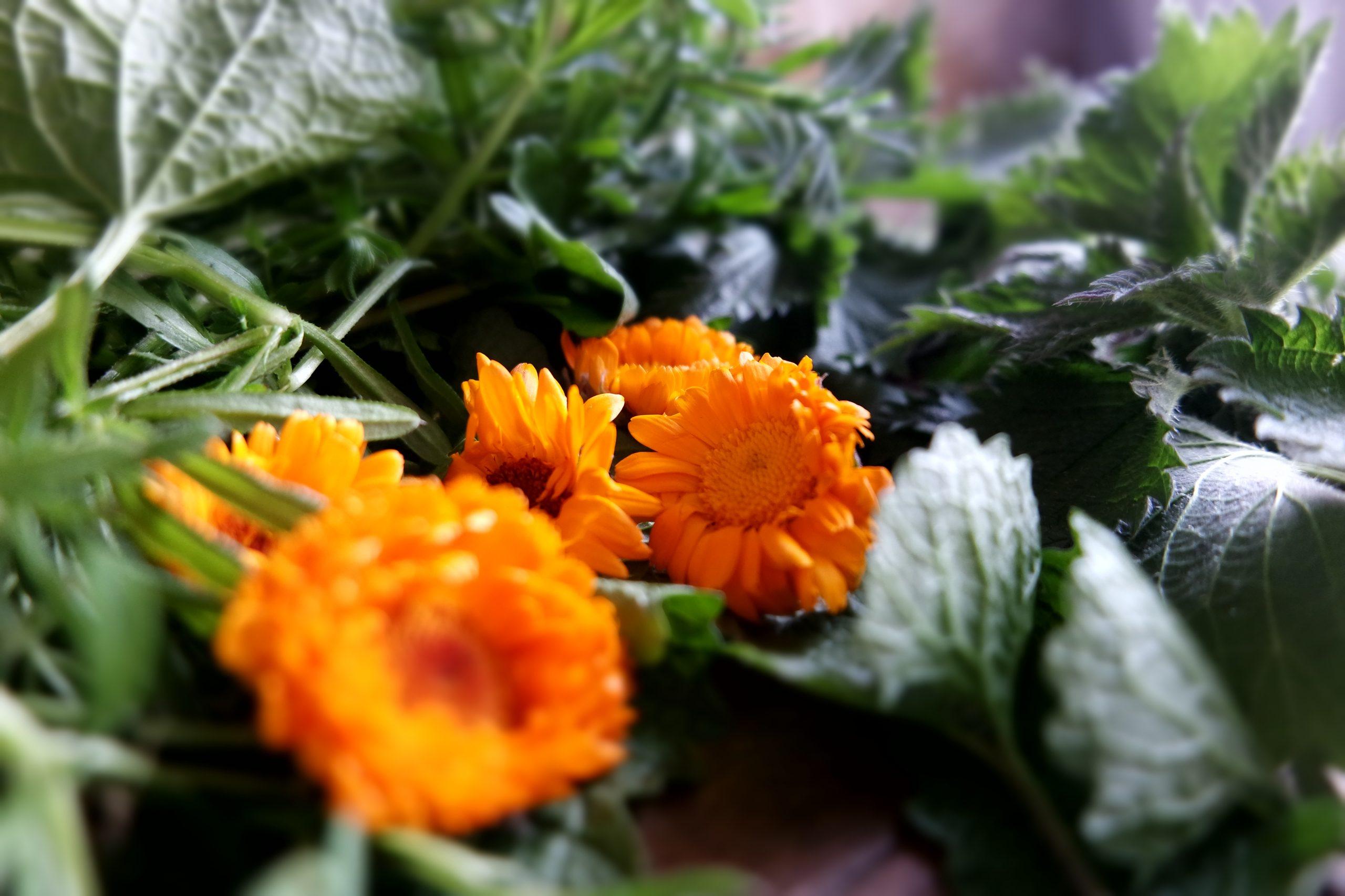 plantes détoxification