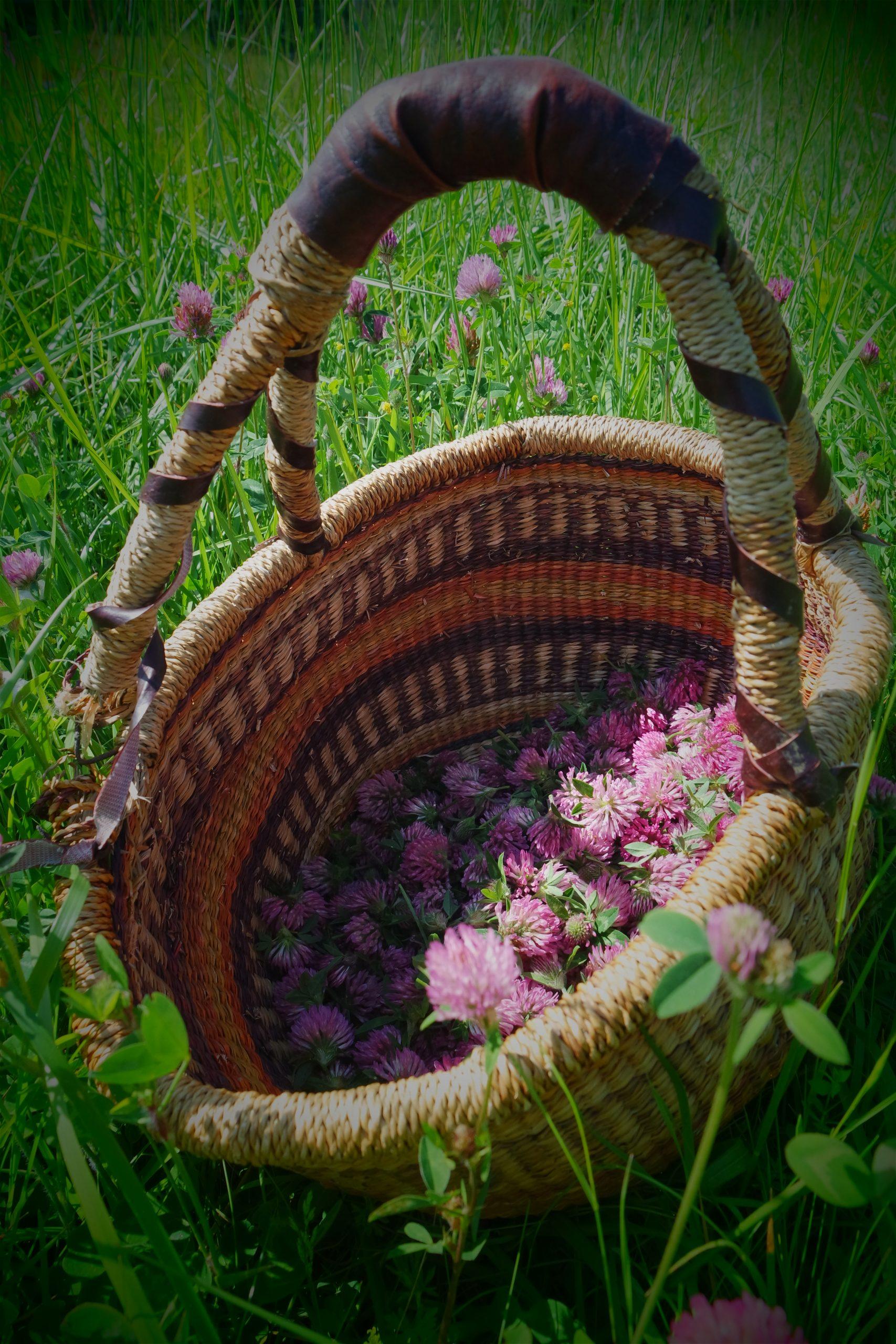 cueillettes plantes sauvages