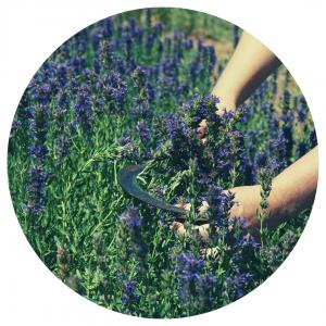 formation herboristerie holistique