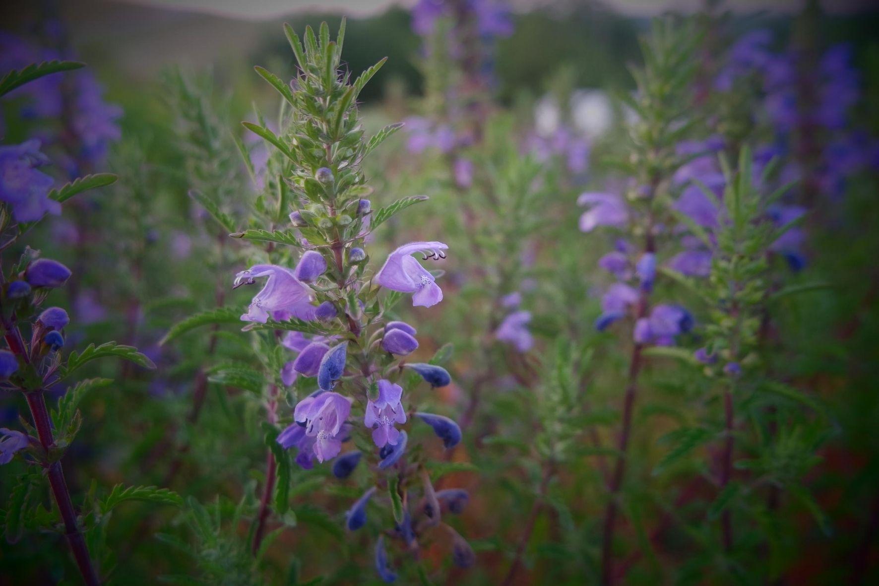 plantes médicinales hiver immunité