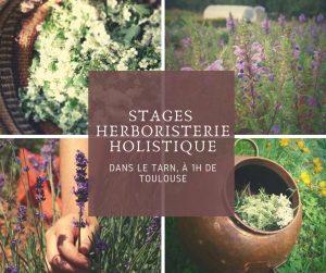 stage plantes médicinales formation