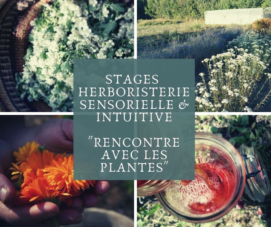 approche sensible des plantes